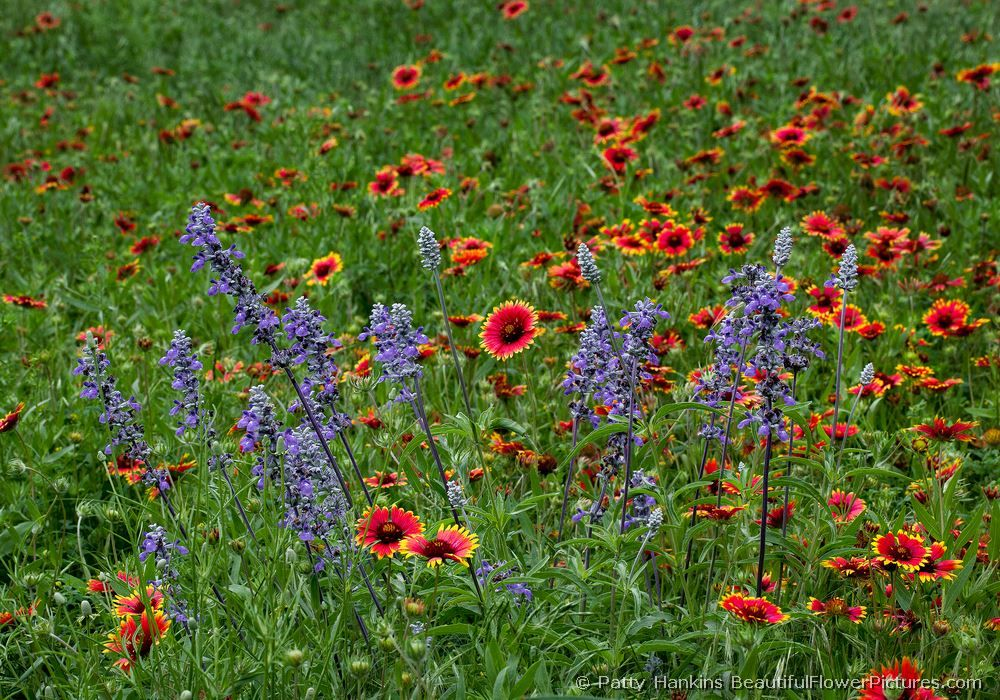 Flower Garden Texas Photo Gallery By Ned Texas At Pbase Com