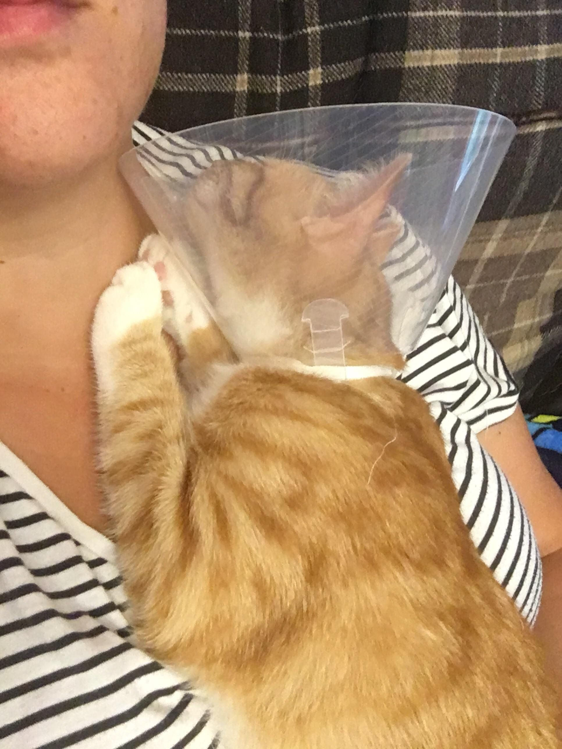 My Cat Has The Cone Of Shame For The Week And All He Wants To Do Is Cuddle And Be Carried Around Meow Moe Cats Baby Animals Pictures Pretty Cats