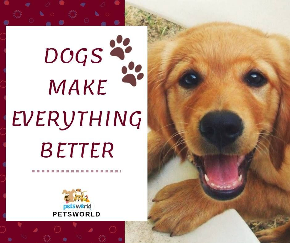 True That 3 Petsworld Dog Dogs Cute Cuteanimals Animals Pet Pets Petlovers Quotes Quoteoftheday Quotestoliveby Qu Buy Pets Pets Animals Beautiful