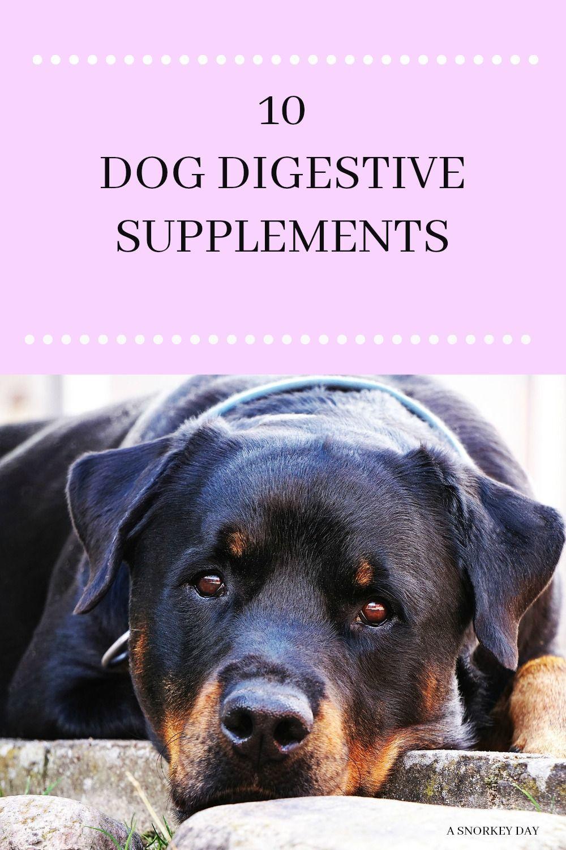 10 Dog Digestive Remedies Dog Diarrhea Remedy Stomach Remedies