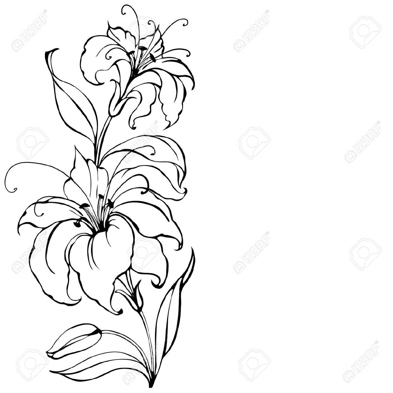 Lily Tattoo Line Drawing : Lily flower royalty free cliparts vectors and stock