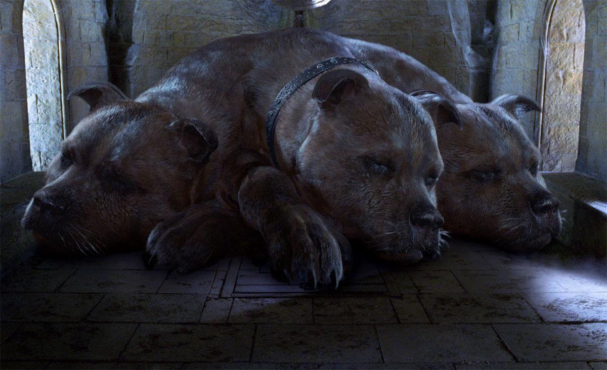 Fluffy Harry Potter Sammlung Niedliche Hintergrundbilder Susse Tiere