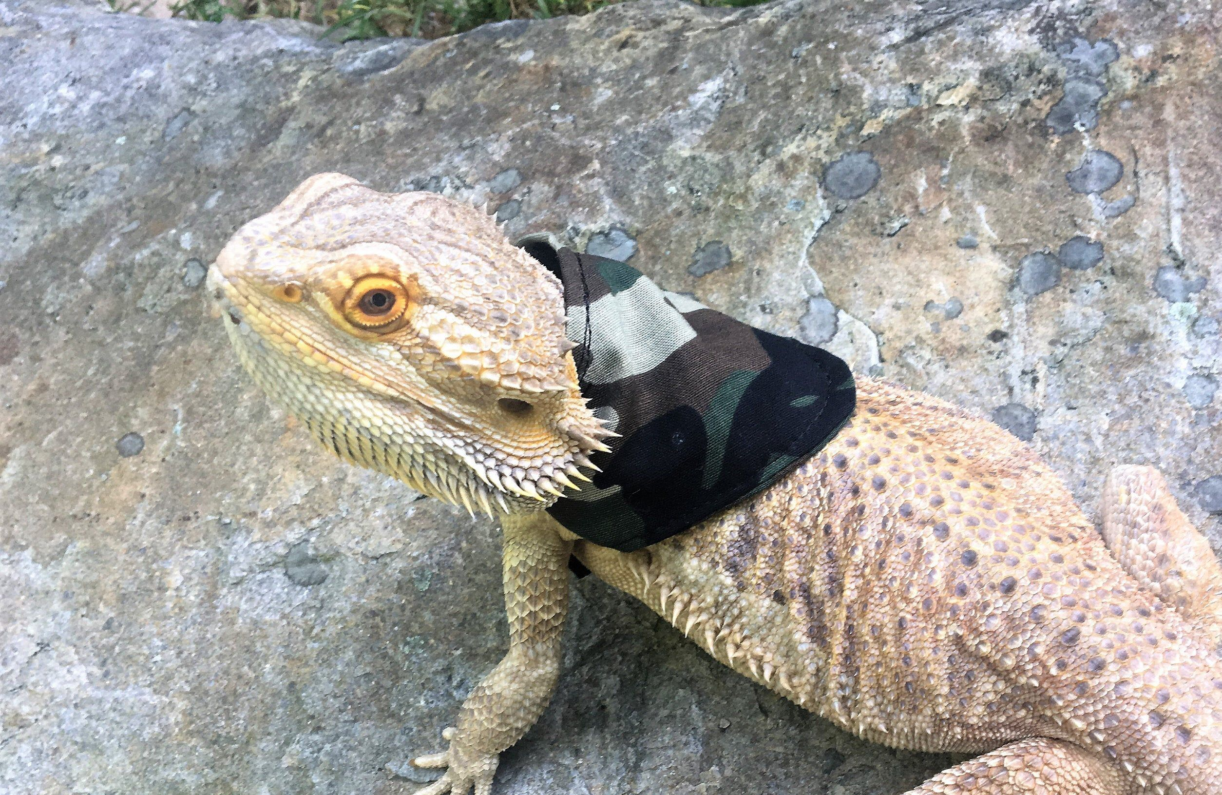 Camouflage Bandanna For Bearded Dragon Or Other Reptile Or Small Pet Small Pets Bearded Dragon Pets
