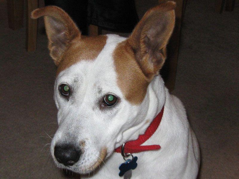 CLARA APS of Durham Animals, Animal protection, Durham
