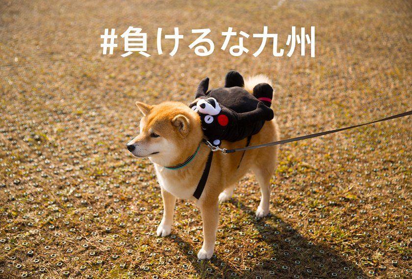 平成28年度動物愛護週間中央行事 動物愛護ふれあいフェスティバル 柴犬 柴犬まる 熊