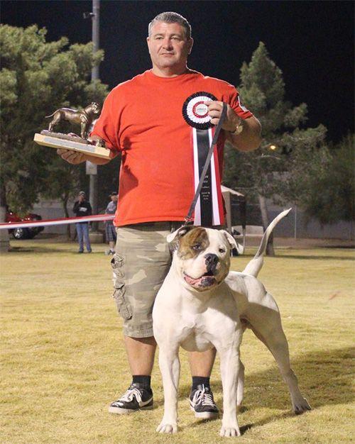 Bybee S American Bulldogs American Bulldog Puppies American