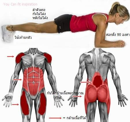 Pin by cindy holmes on exercise exercise exercise for Plank muscles worked diagram