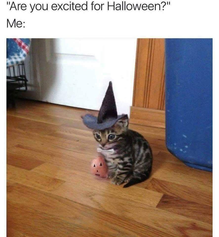Pin by Tiffany Time on Halloween Funny animal photos