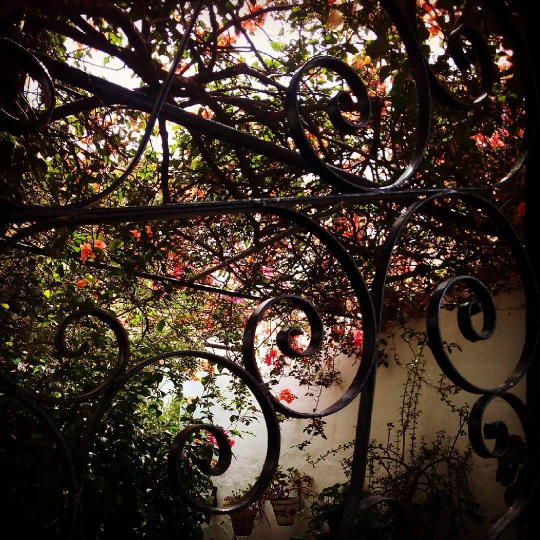 #fotografía #garden #rincones #santikarootsart #agosto