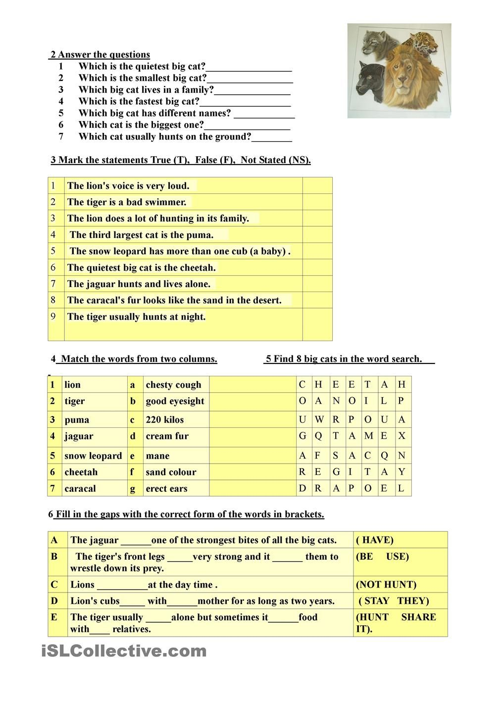 Workbooks weather expressions in spanish worksheets : Big cats (exercises) | ESL 2 | Pinterest | Worksheets, English ...