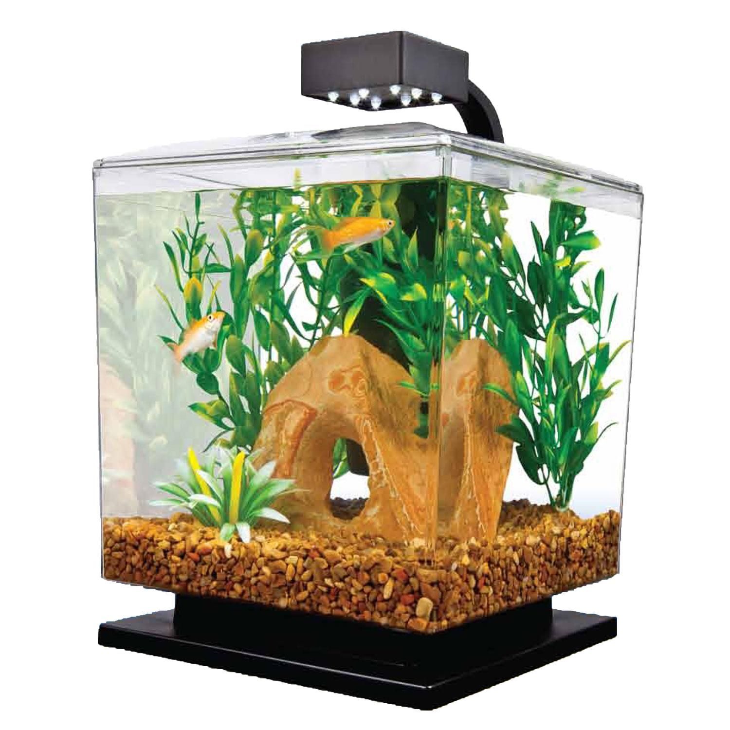 Tetra 1 5 Gallon Led Desktop Aquarium Kit Aquarium Kit Desktop Aquarium 5 Gallon Aquarium