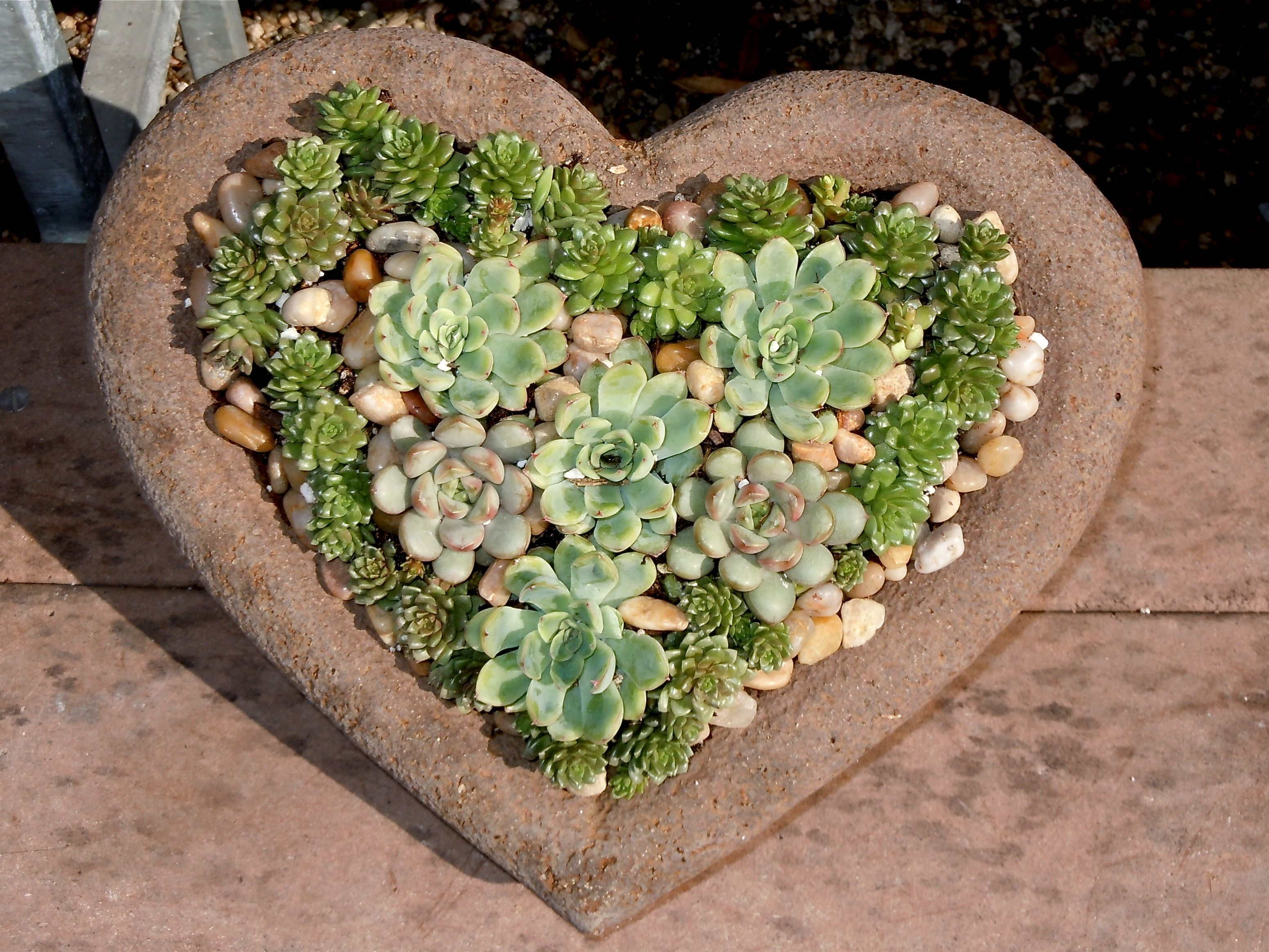 This was spotted at Rodger's Gardens, Corona del Mar, CA.  They wanted nearly one hundred dollars for it and it is only about 18 inches across.  Very cute for Valentine's Day!