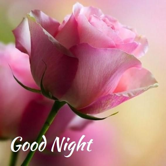 Good Night Flowers images, pictures and wallpapers -Gud Nite