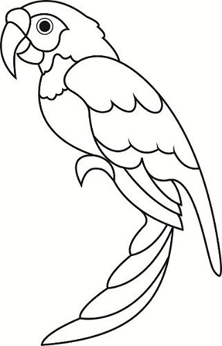 coloring pages pirate parrot - photo#34