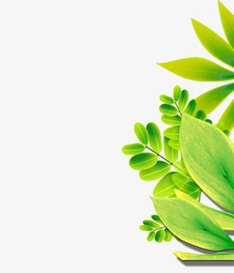 Plants Green Leaves Leaf Png And Vector With Transparent Background For Free Download Plants Leaves Green Leaves