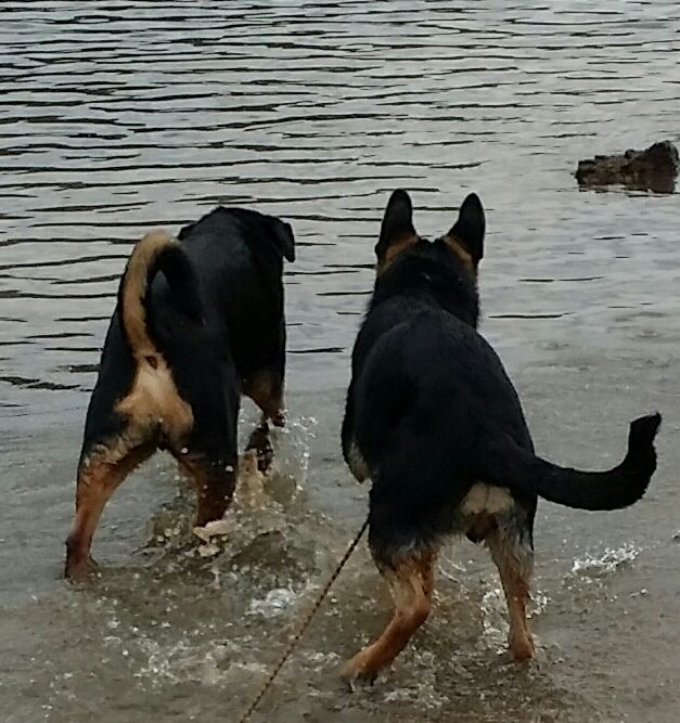 Playing In The Water Near Eureka Springs Arkansas With Dobbie