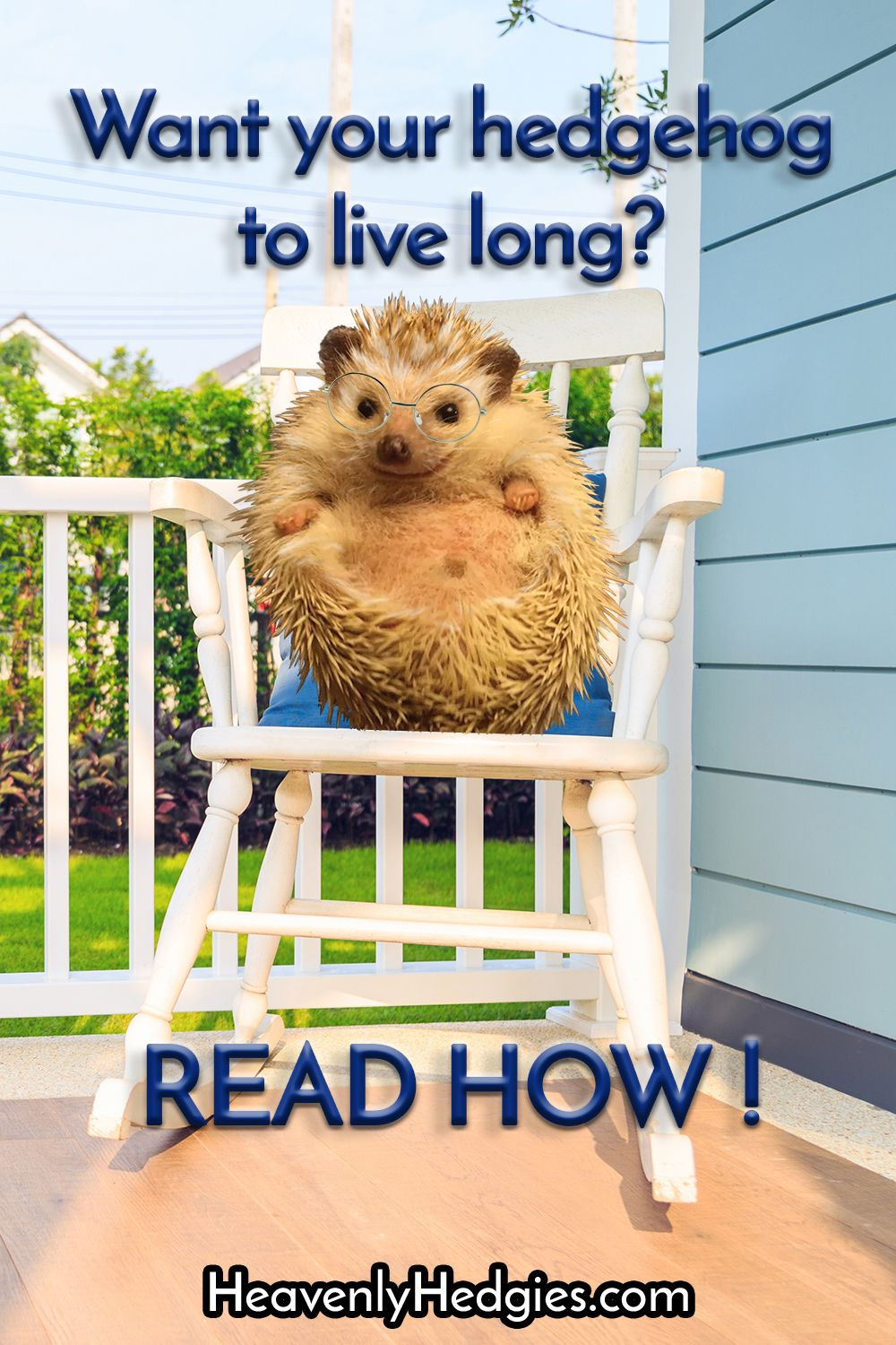 Hedgehog lifespan and what impacts it pet care hedgehog