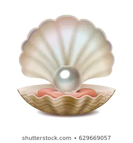 Open Sea Shell Stock Illustrations Images Vectors Shutterstock Shell Drawing Shell Art Sea Shells