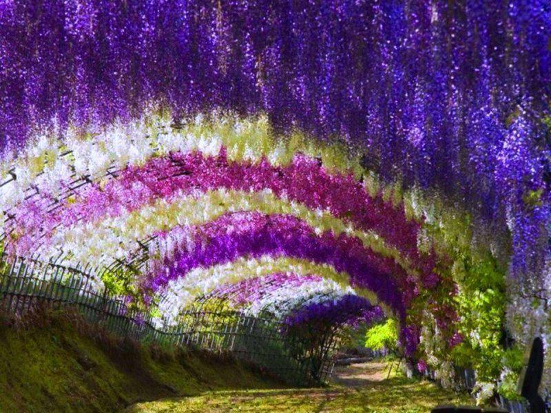 Paisajes de flores - Fotografias y fotos para imprimir | natural ...