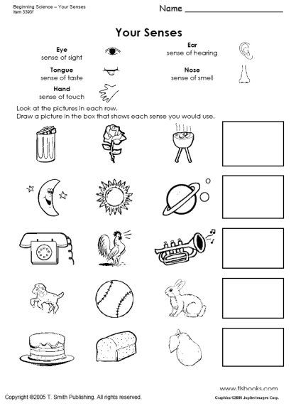 Beginning Science Unit About Your Five Senses Science Worksheets 5 Senses Worksheet Five Senses Worksheet