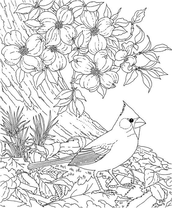 Cardinal Love Birds Coloring Pages Bird Coloring Pages Flower Coloring Pages Animal Coloring Pages