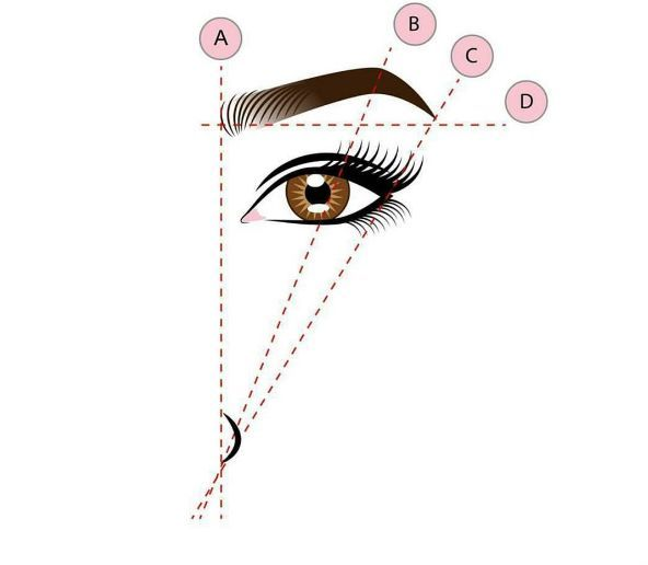 As a general guide the head (A) of your eyebrow should line up with the outer edge of your nostril and the tail (C) should line up diagonally with that nostril.