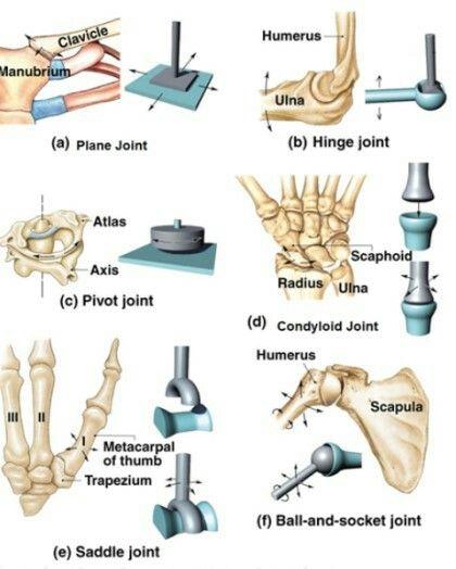 Pin de Kim Hickey en Anatomy | Pinterest | Anatomía