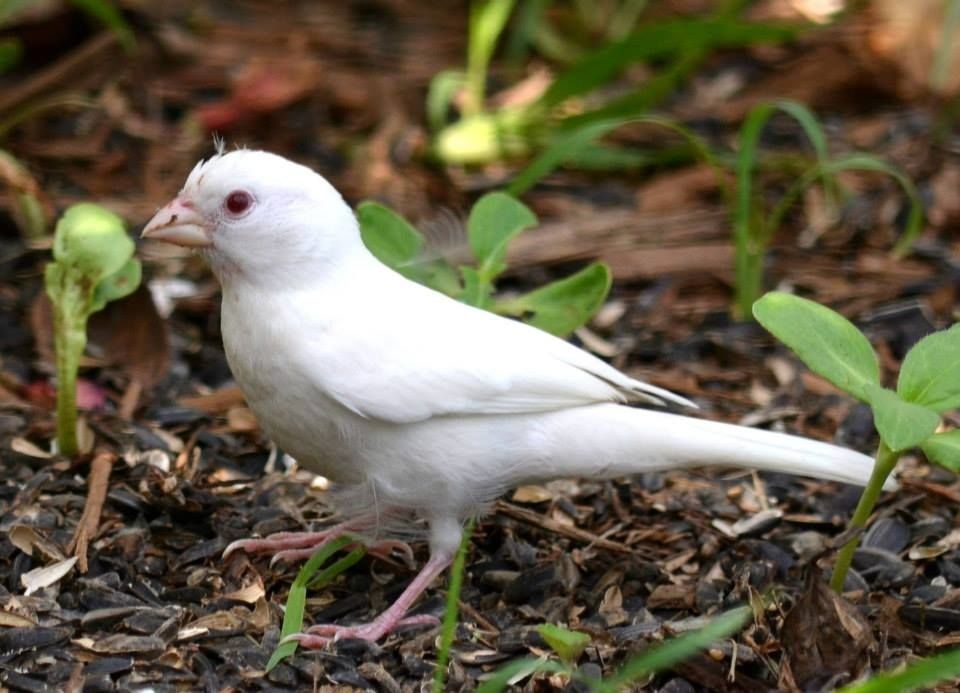 25++ Albino bird ideas