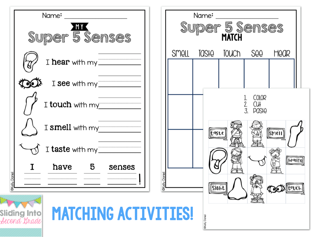 Updated 5 Senses Packet Fun Matching And Labeling