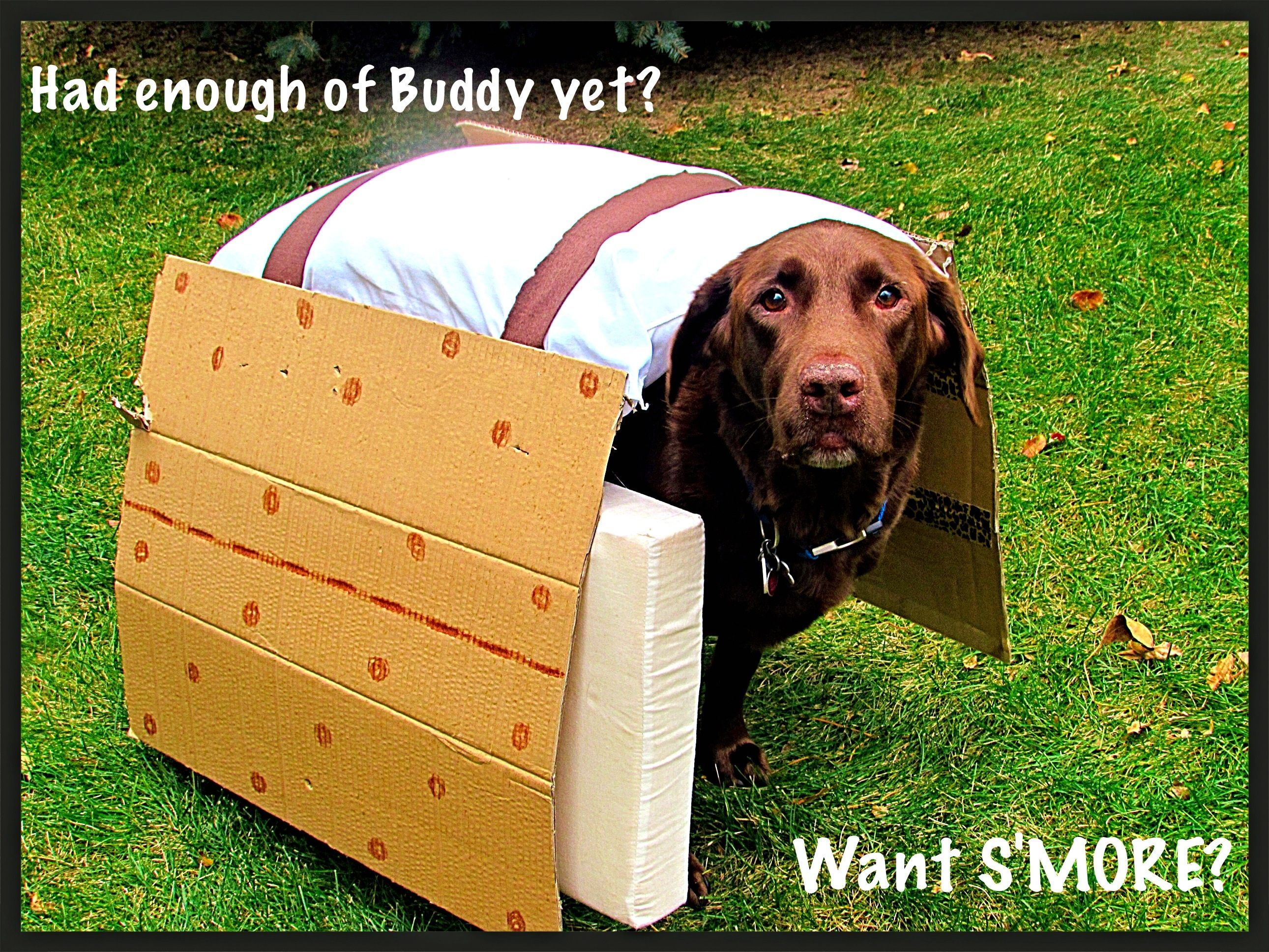 Best Halloween Costume For A Chocolate Lab Diy Dog Stuff Cool
