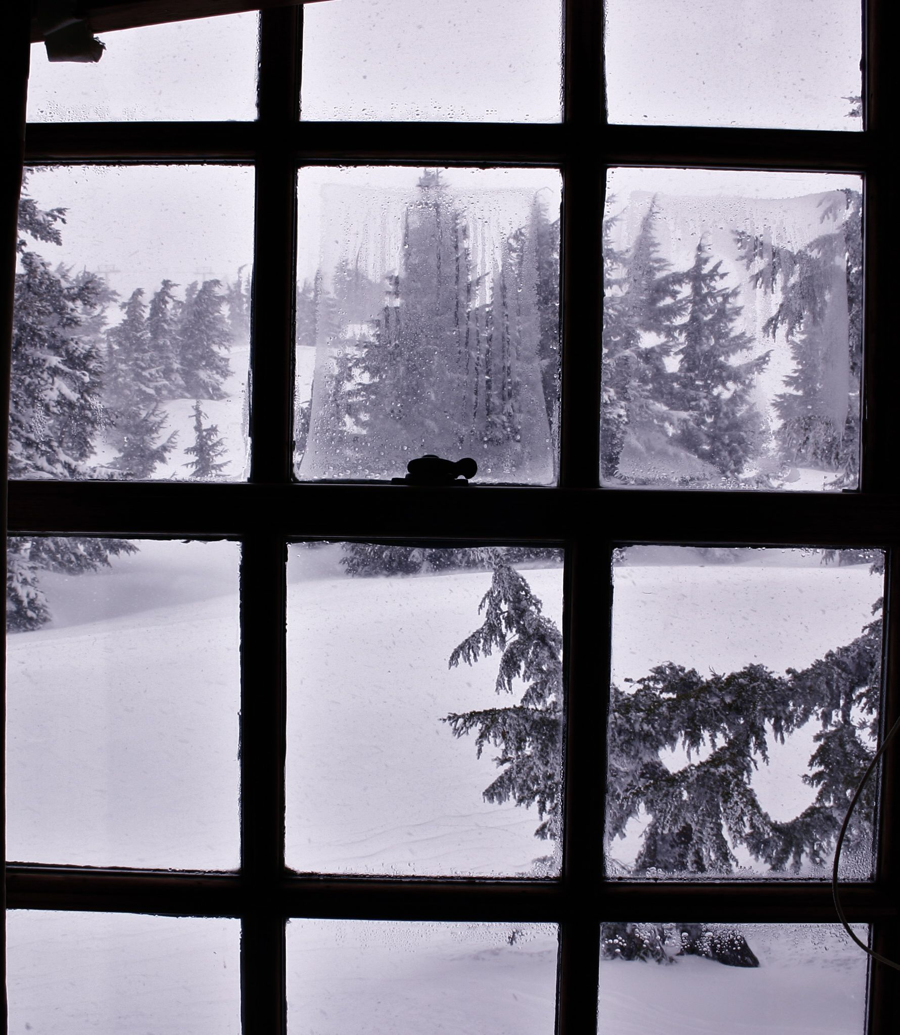 room with a view, timberline lodge