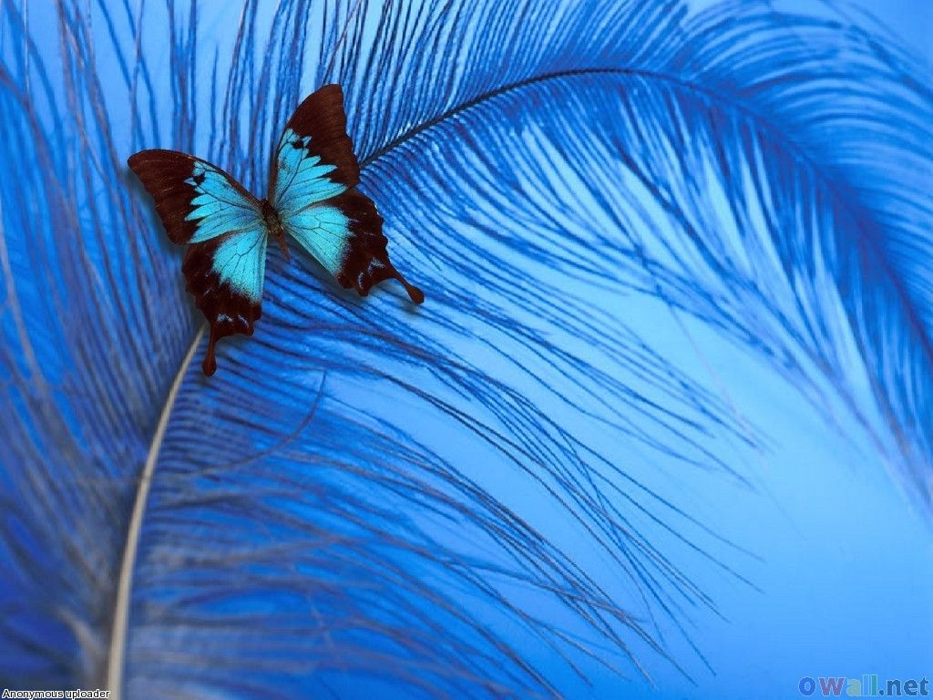 butterfly on a feather, all in beautiful blues | buggy for