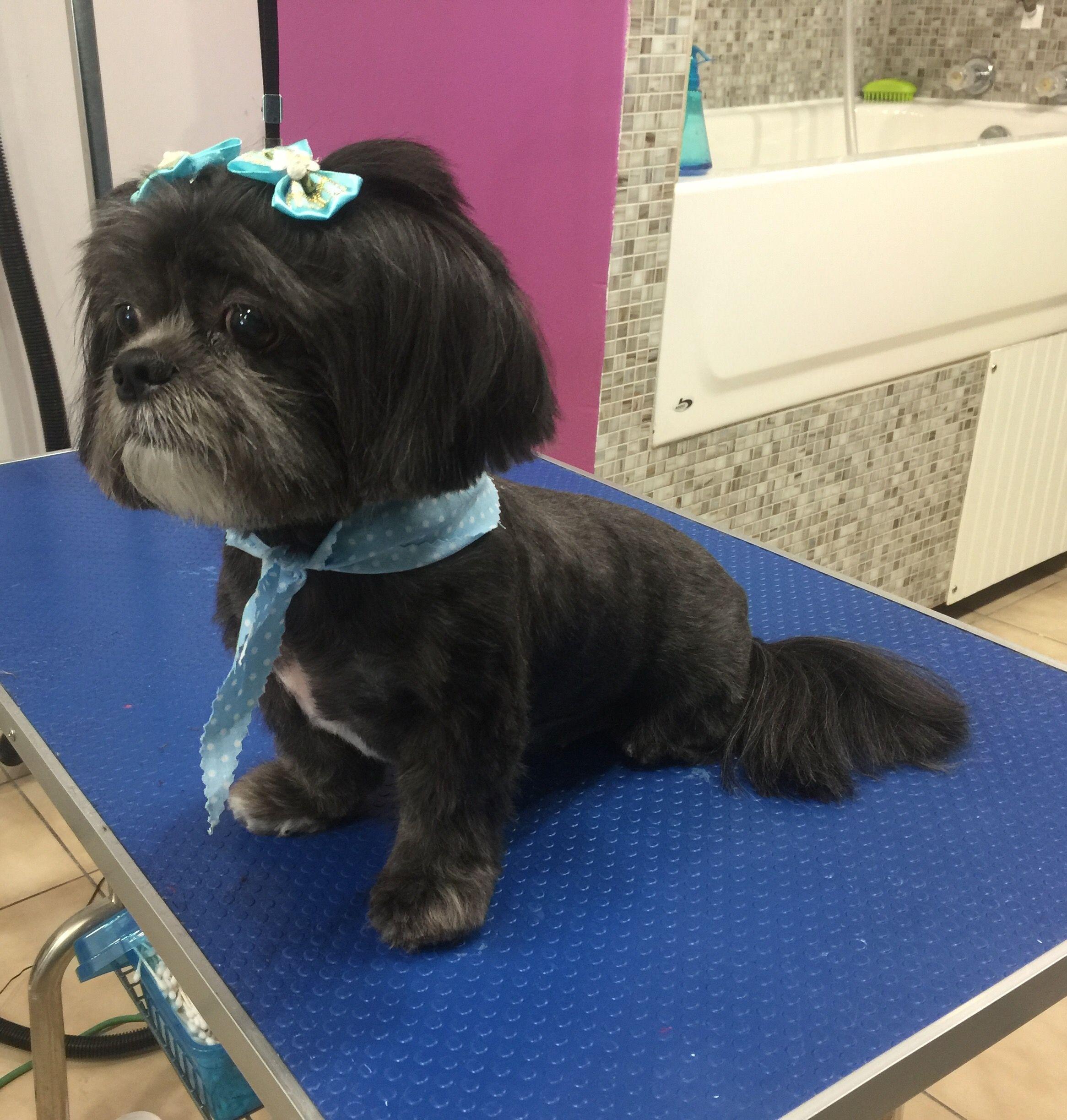 Shih Tzu Doggy Daycare Daycare Pet Hotel Pet Boarding Pet