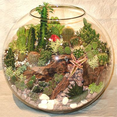 Indoor Cactus Garden I made a terrarium in a fish bowl once id love to make one again i made a terrarium in a fish bowl once id love to make one again in the future after my aerogarden takes off terrarium gardens workwithnaturefo