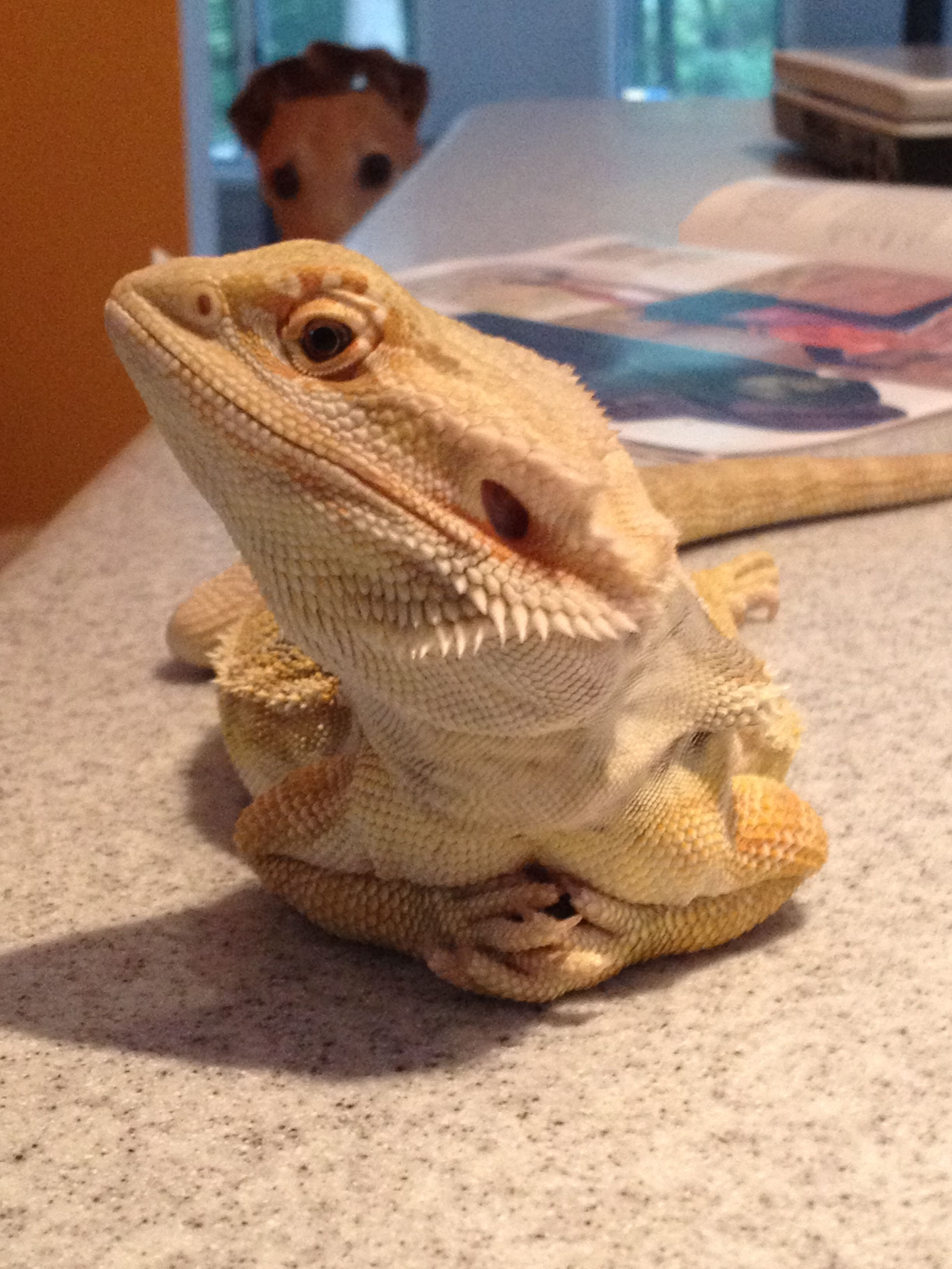 Live Crickets for Sale - Ghann's Live Crickets for Reptile ...