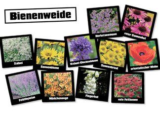 Obi S Bienenweide Stauden 24 Pflanzen Stauden Pflanzen Bienen