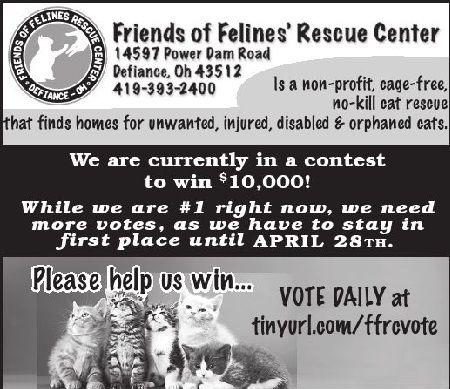 Friends Of Felines Rescue Center In Defiance Ohio Feline Rescue Defiance Ohio