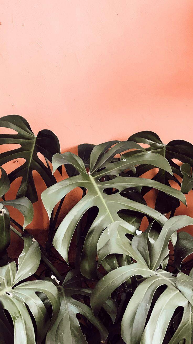 botanical // plants // pink wall // grow Plant wallpaper