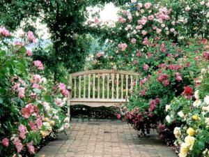 English Rose Garden | Meditation room: Surround a bench with glorious English roses ...