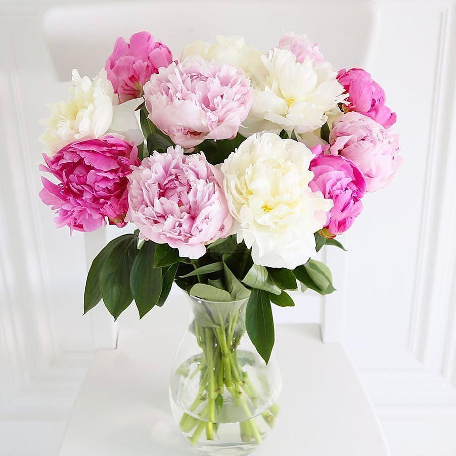 British Pink Peonies The Traditional Peonies Are In Season From Mid May Till Early July Buying Local An Flower Delivery Flowers Delivered Send Flowers Online