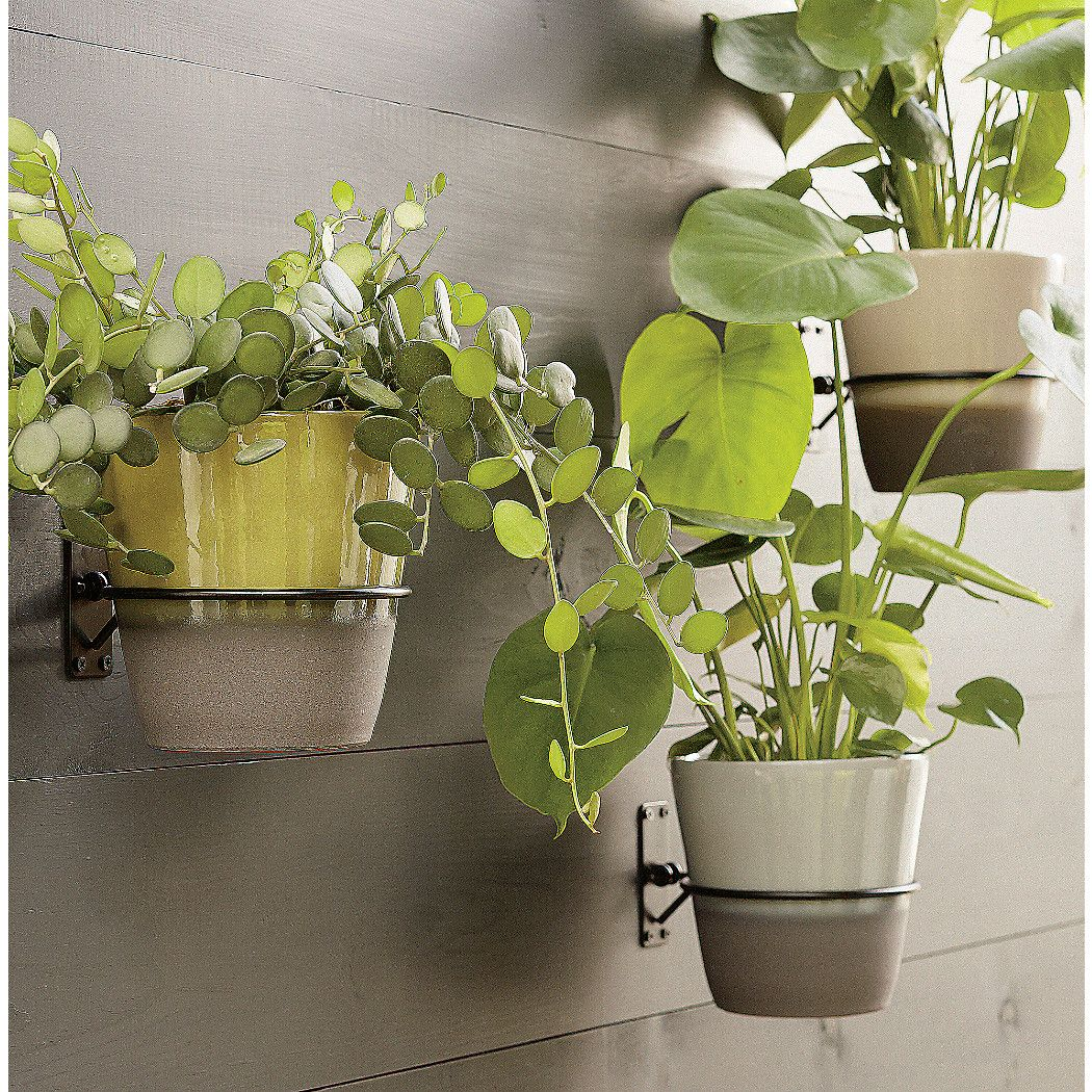 Wall Planter Hook Reviews Crate And Barrel In 2020 Wall Planter Planters Wall Plant Holder