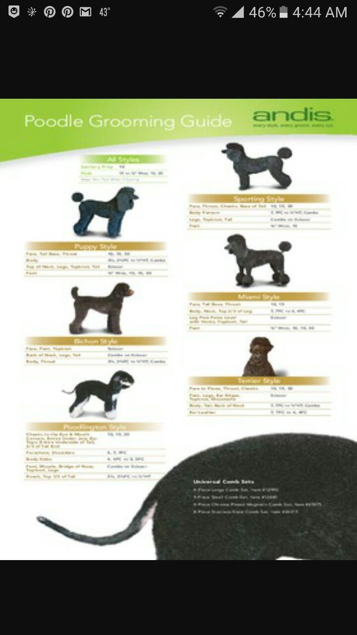 Poodle Grooming Guide Andis Blade Chart Poodle Grooming Dog Grooming Dog Grooming Salons