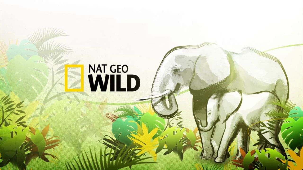 ABOUT THE NAT GEO WILD, EAR CAMPAIGN, ID Promos package For
