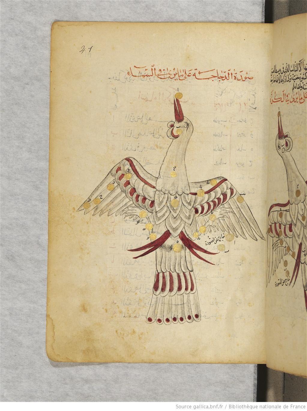 Cygnus (al-dajajah), the swan. (Constellations of the northern hemisphere). Souvar al-nodjoum. Traité sur les constellations et catalogue d'étoiles, par Abd ar-Rahman al-Soufi