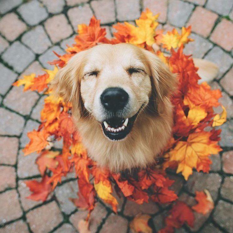 Beautiful Smile Lizzie Bear Wink Happy Cute Doggo Puppy Golden