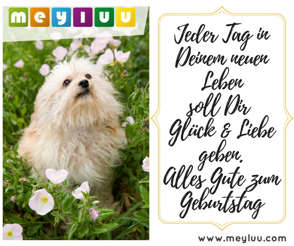 Tierische Glückwünsche Zum Geburtstag Alles Gute Zum