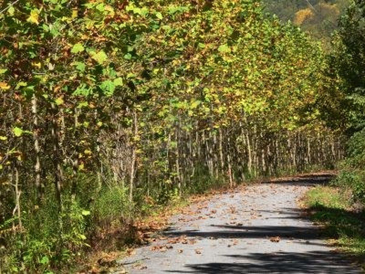 568579-autumn-scene-on-bike-path-reminiscent-of-monet-impressionist-art.jpg (1200×900)