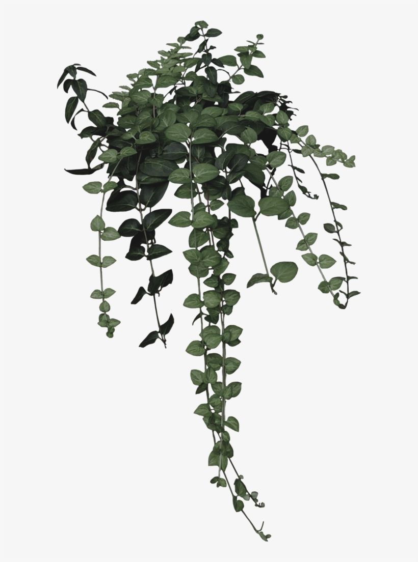 Download Ivy Clipart Nature Aesthetic Plant Drawing Png For Free Nicepng Prov Aesthe Plant Aesthetic Potted Plants Outdoor Potted Plants Patio