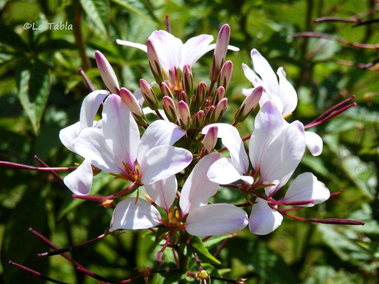 El Blog de La Tabla Plantas Jardin mediterraneo Plantas para
