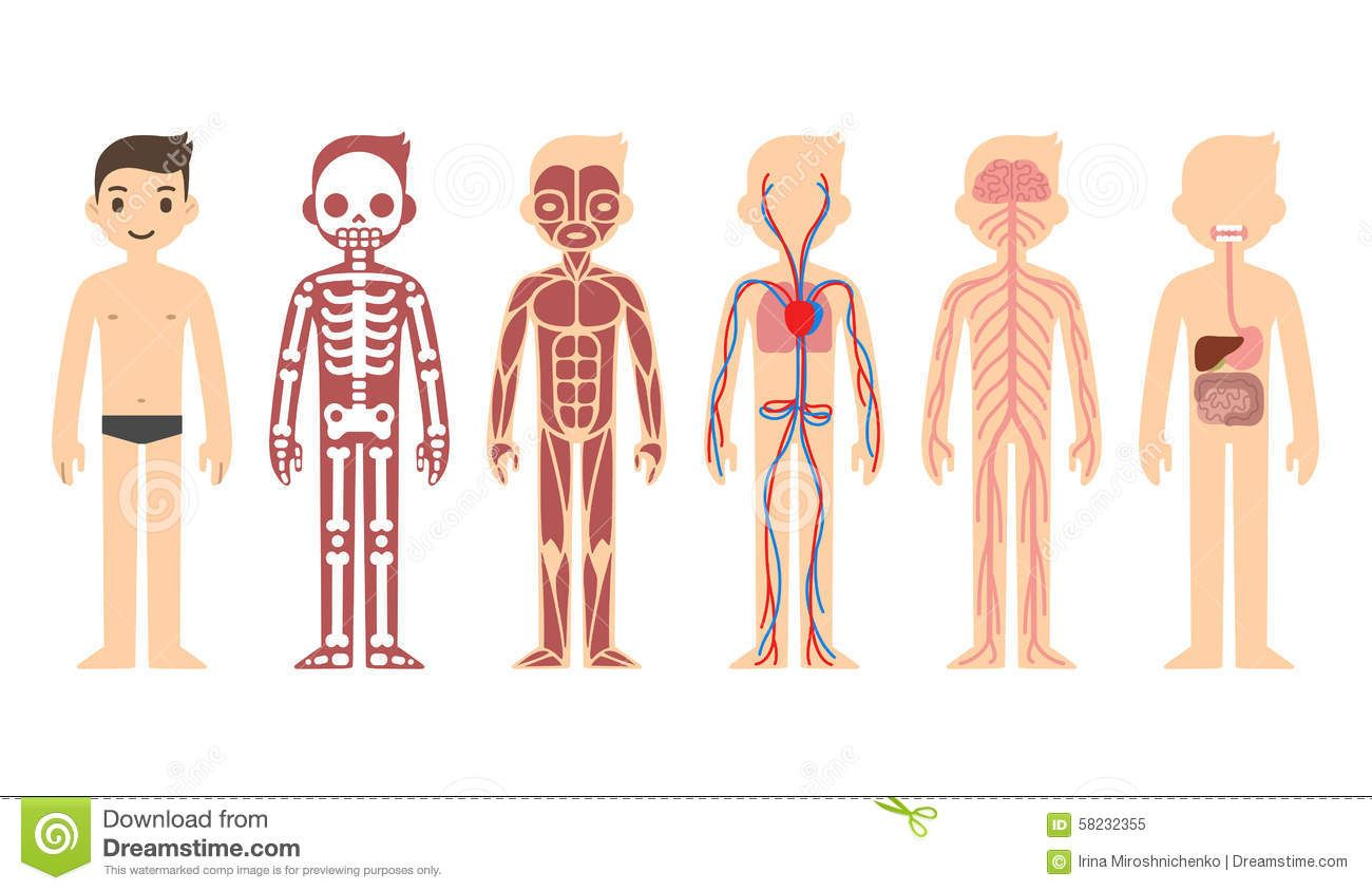 human body systems for kids photos body systems kids human anatomy diagram [ 1300 x 844 Pixel ]